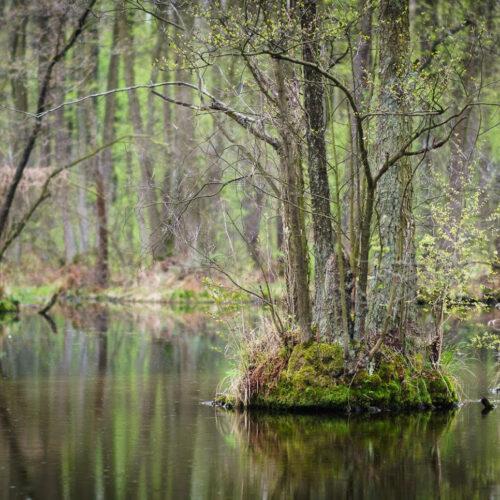 Prezentacja: Naturalne zdolności rzek do samooczyszczania  w kontekście korzyści ekonomicznych