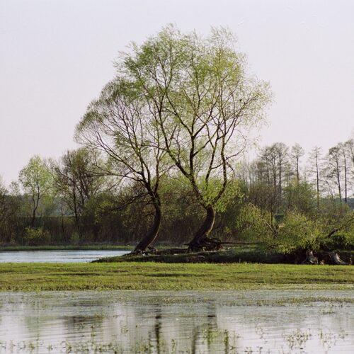 Publikacja: River ecology
