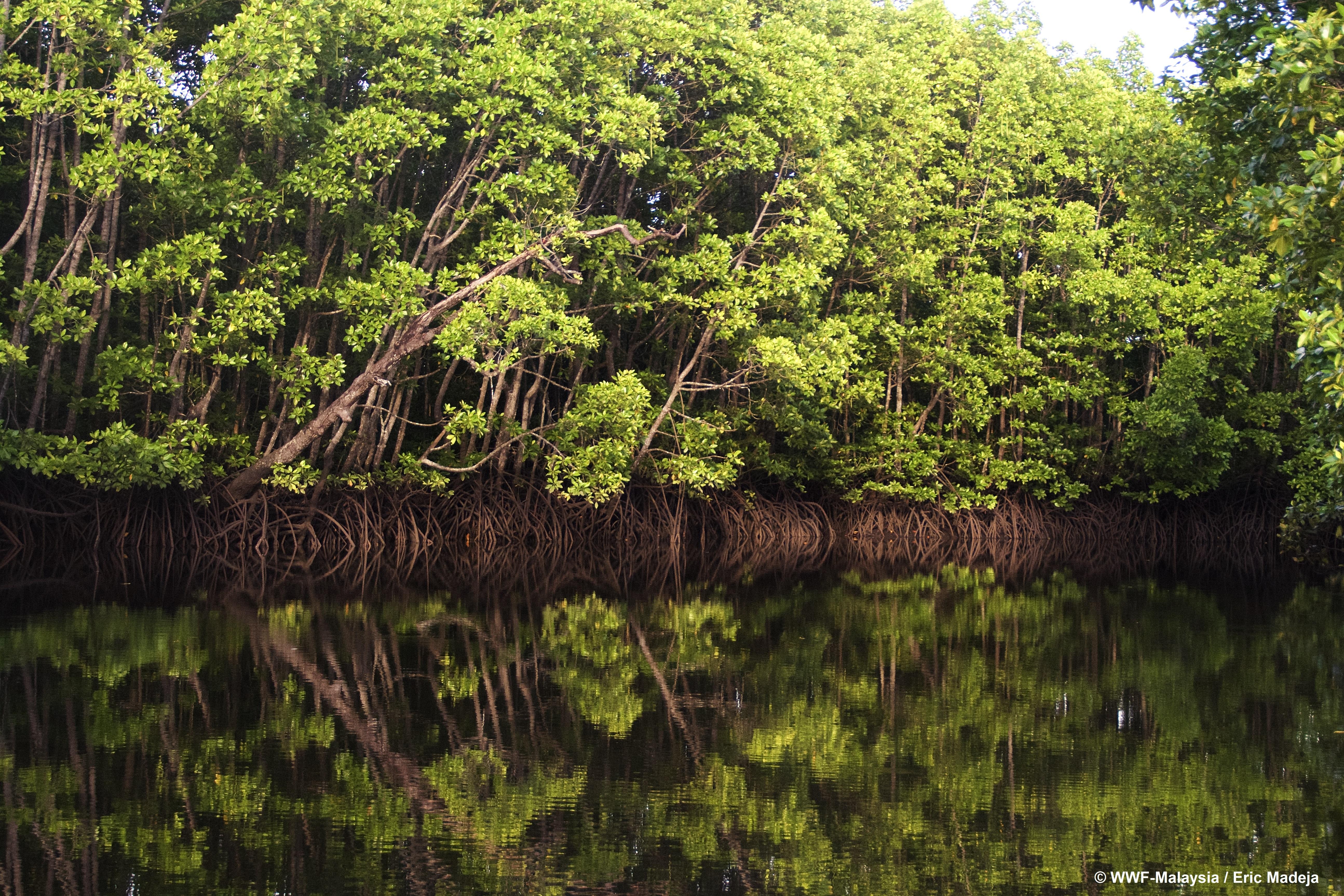Ich utrata doprowadzi nas do klęski. Światowy Dzień Mokradeł – najszybciej ginących ekosystemów na świecie.