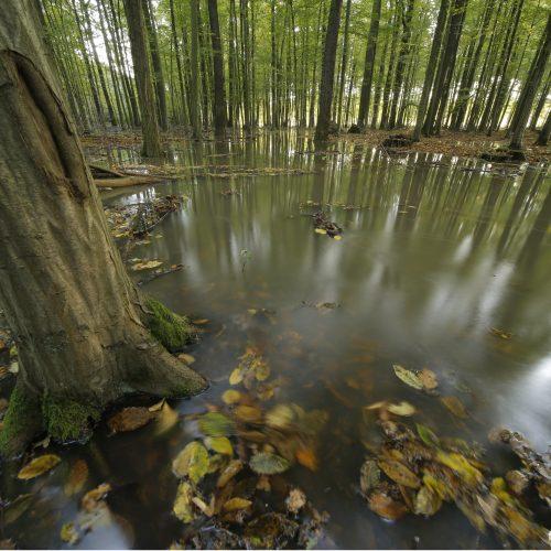 Ochrona przeciwpowodziowa i ochrona przyrody – to połączenie jest możliwe!